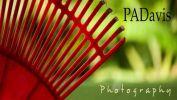 PA Davis-photo card